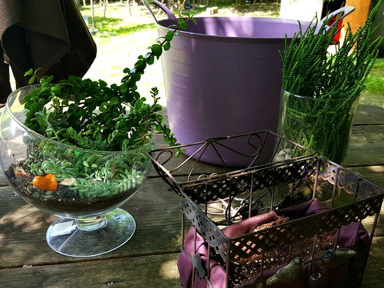 Planting a hanging bird cage planter