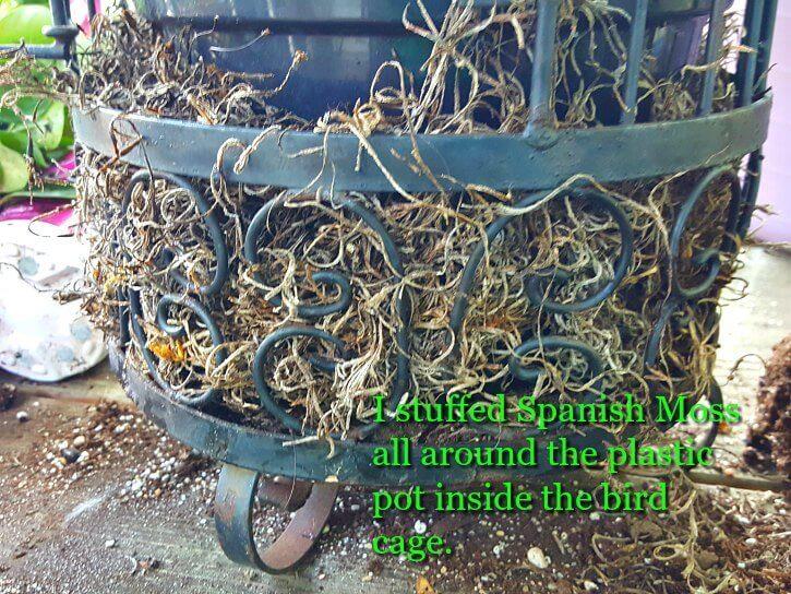 Spanish Moss for Decoration