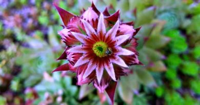 Succulent-Garden-The-Hypertufa-Gardener