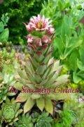 The Succulent Garden-TheHypertufaGardener.com