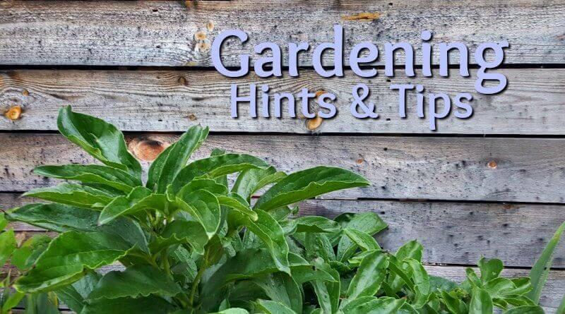 Unbelievable Garden Tips