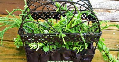 hanging bird cage planter