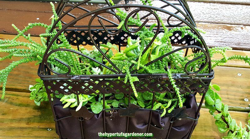 Hanging Bird Cage Planter – How I Made One