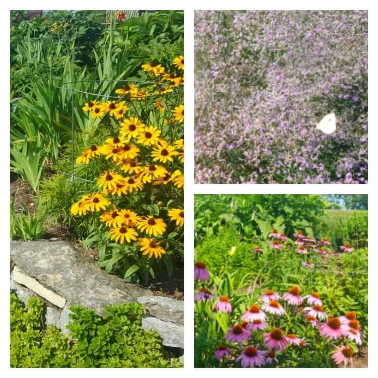 Cox Arboretum Flowers