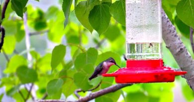 Hungry Hummingbirds-The Hypertufa Gardener