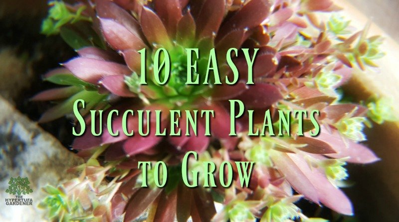 10 Easy Succulent Plants To Grow This Year
