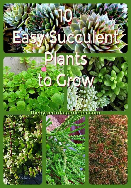 10 Easy succulent plants to grow(1)(1)(1)