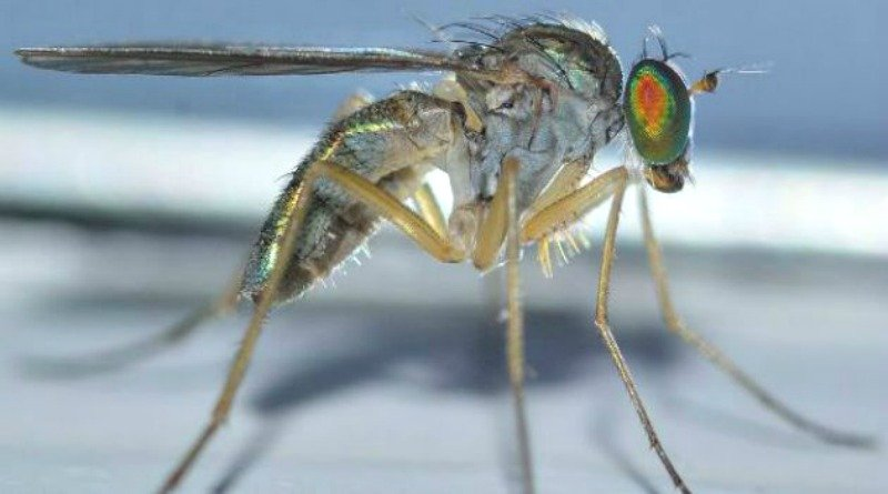 Dont-bring-the-gnats-inside-The-Hypertufa-Gardener.com_