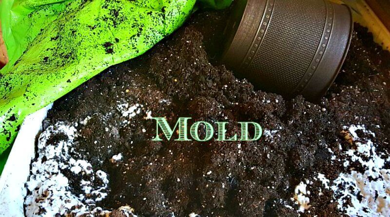White Mold Growing On My Potting Soil Garden Issues