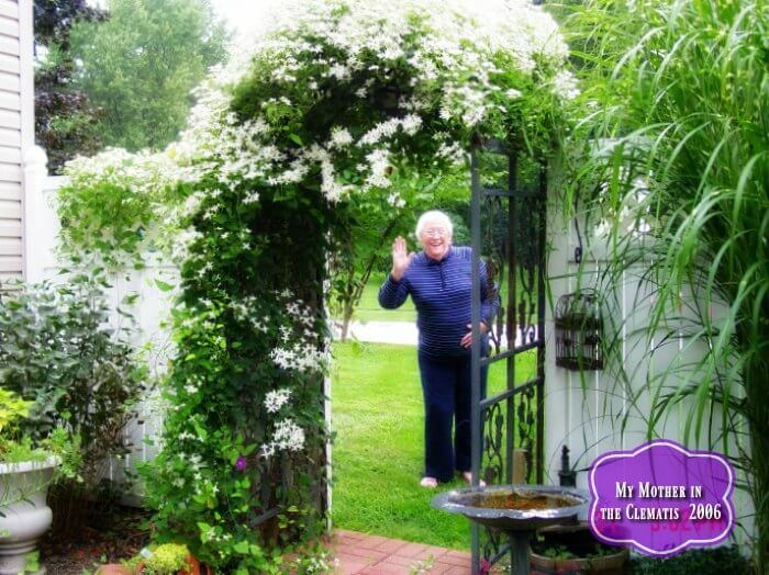 Mother in the Sweet Autumn Clematis(1)