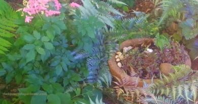 My hypertufa shade trough and bowls in the garden