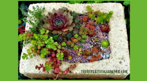 Loving My Hypertufa Planters