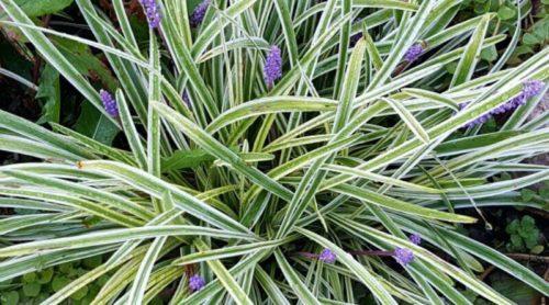 Monday – More Garden Tips