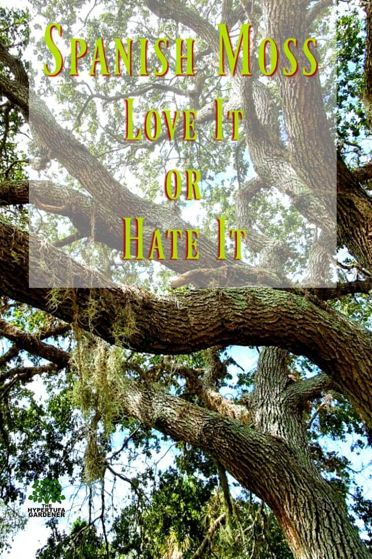 Spanish Moss - Love it or Hate it