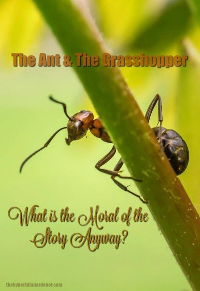 The moral of the story of The Ant and The Grasshopper