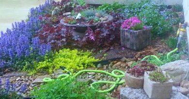 Front Firepit Garden