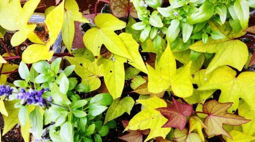 Gardening in November – Hints & Tips