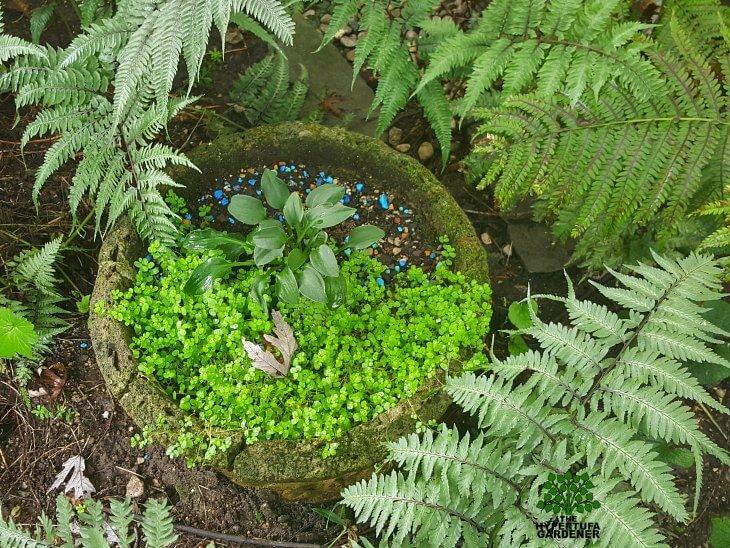 Kims Gardens 2015 - Hypertufa pots in shade