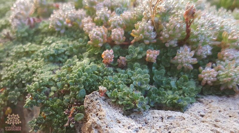 Kim's Gardens 2016 - The Hypertufa Gardener