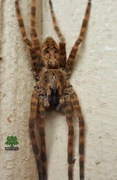 Kims Gardens 2016 - spider visit