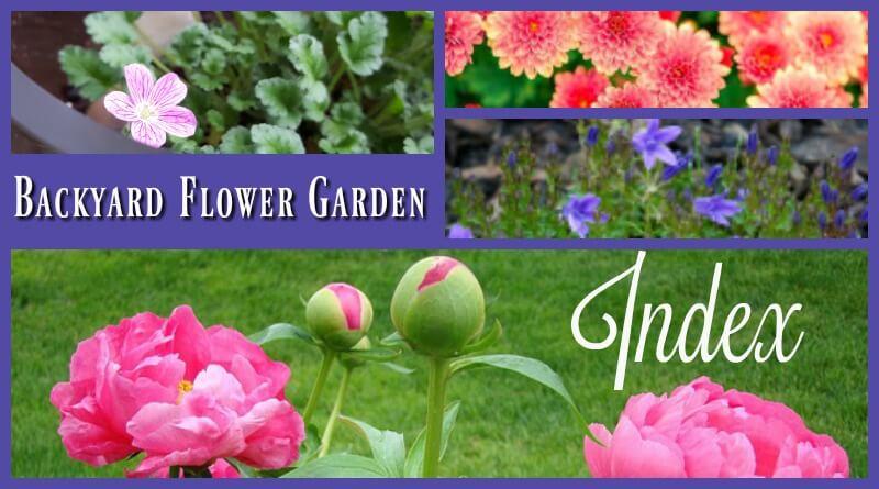Backyard Flower Garden - My Post Index
