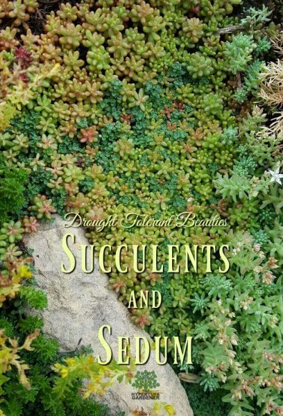 Succulents and sedum - Drought tolerant beauties