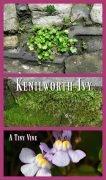 Kenilworth Ivy - A Tiny Vine for Hypertufa