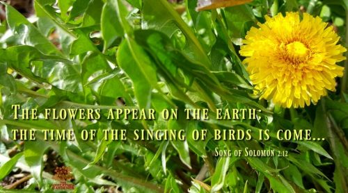 Birds Singing In The Morning – It's The Beginning of Spring!
