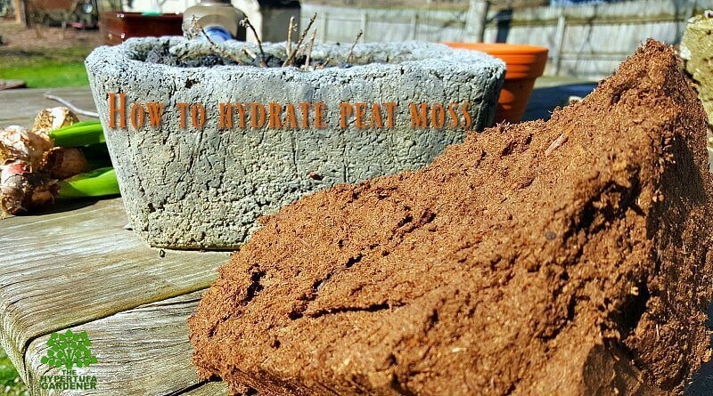 How to Hydrate Peat Moss - When You Need it NOW