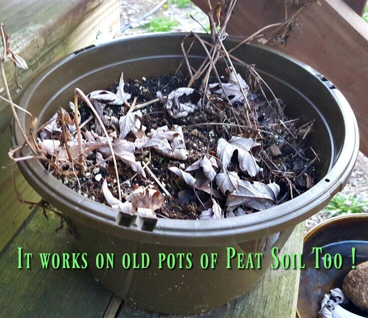 How to Rehydrate Peat Moss - Even in old planters