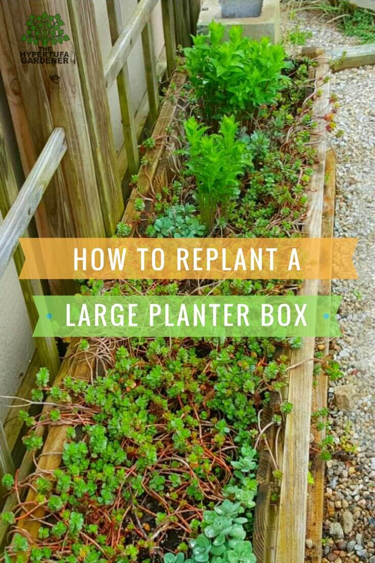 How to replant a large planter box
