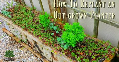 How to replant an out-grown planter