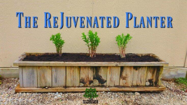 The Rejuvenated Planter Box