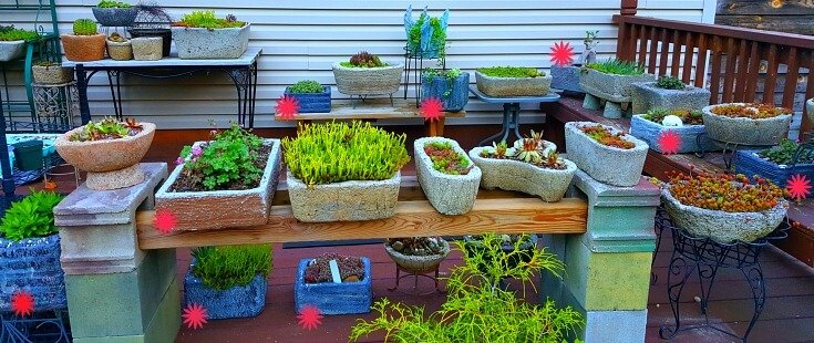 Marked Styrofoam planters with asterisk