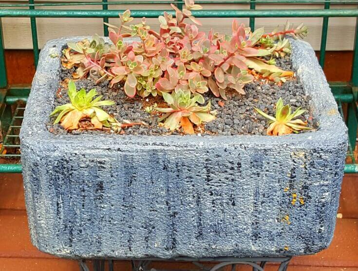 Styrofoam planters coated with cement - Newly planted with sedum and semps