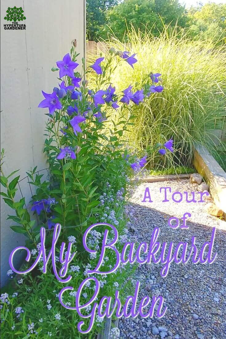 A Tour of My Backyard Garden
