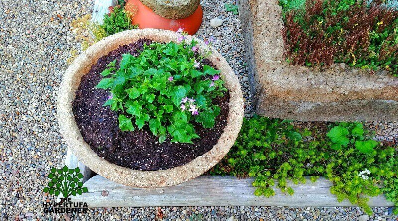 Making Large Trough Planters or Hypertufa Bowls – A Fun Mess!