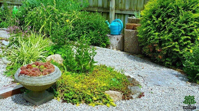 Tour of my Backyard Garden