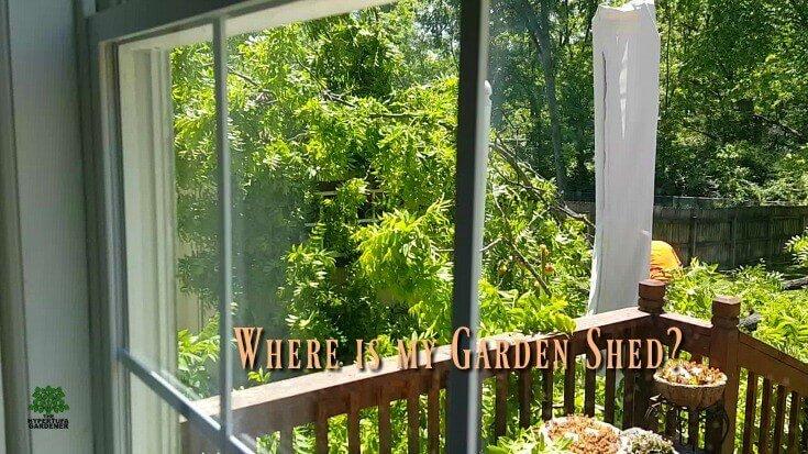 Where is the Garden Shed Under a fallen Black Walnut Tree