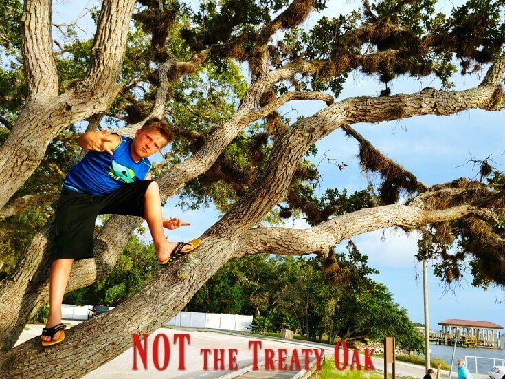Not the Treaty Oak, but it is a Live Oak and that's a great tree for climbing