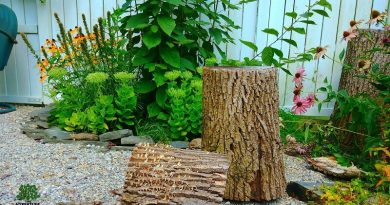 I Told Him No Tree Stumps In The Garden….Oh Wait!