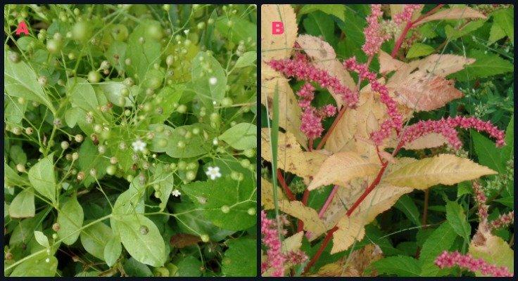 Mystery Plants
