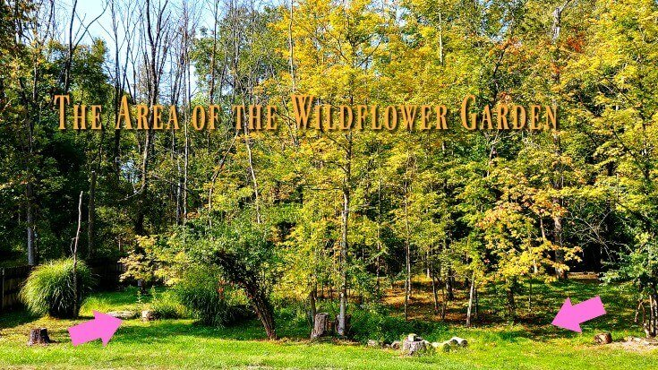 This is where the wildflower garden is located