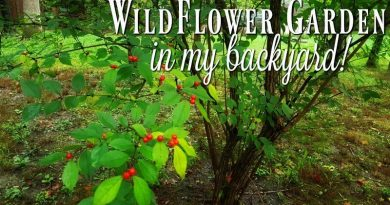 My Wildflower Garden in the Creekbed – Don't Mow It!