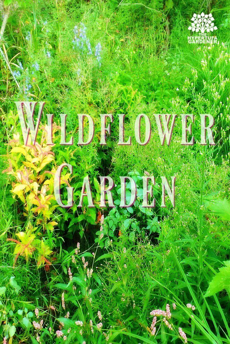 Wildflower AGarden in my backyard