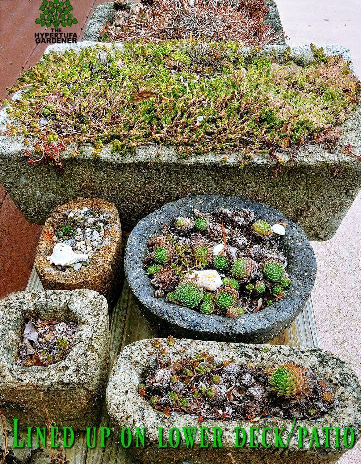 It's time for wintering hypertufa - Lined up planters on patio(1)(1)