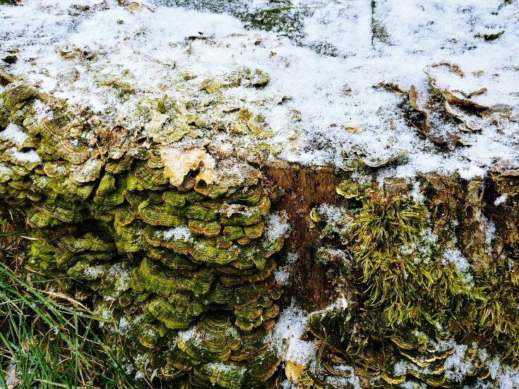 Let it snow on moss