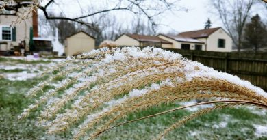 Let it snow - ornamental grasses make great snow catchers