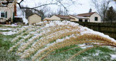Let it snow - ornamental grasses make great snow catchers