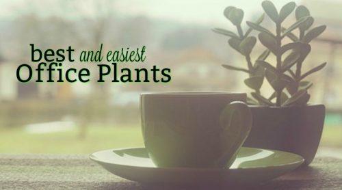 Best Office Plants? Succulents!